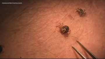 Hunting Ticks: ticks on the march in Maine