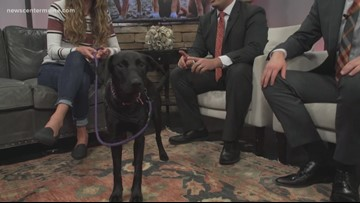 Fetch ME a Home: Tallie the lab-mix is available at NELR