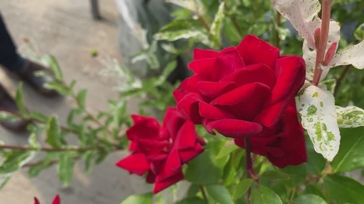 June welcomes beautiful blooms to plenty of gardens