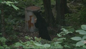 Bear season opens