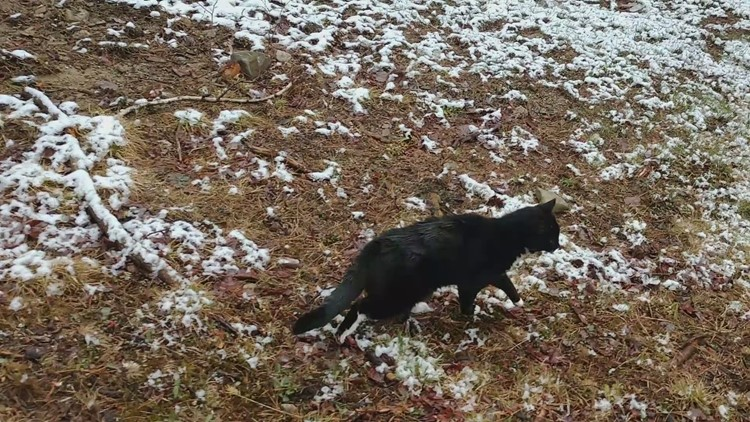 Soola the Cat feels snow on her feet for the first time!
