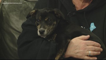 Fetch ME a Home: Betty the pup up for adoption
