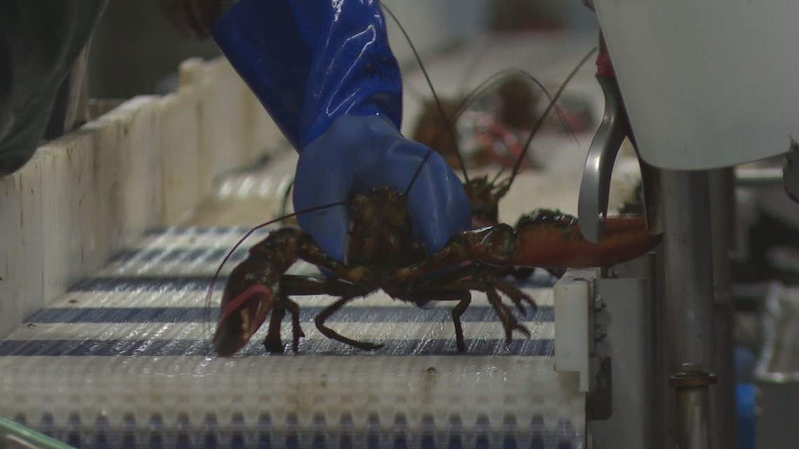 Maine lobster exports plunge 84% since 2018 tariffs