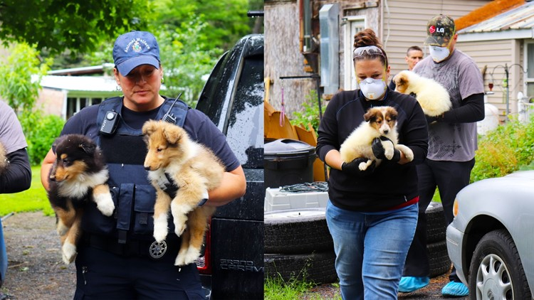 80-plus animals rescued from property in Solon