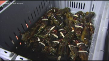 NOAA investing in lobster research