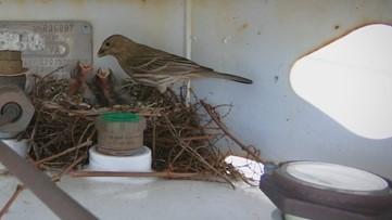 A BREATH OF FRESH AIR: Birds nesting on a propane tank