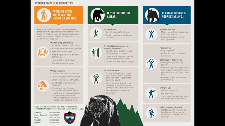 Encountering Bears