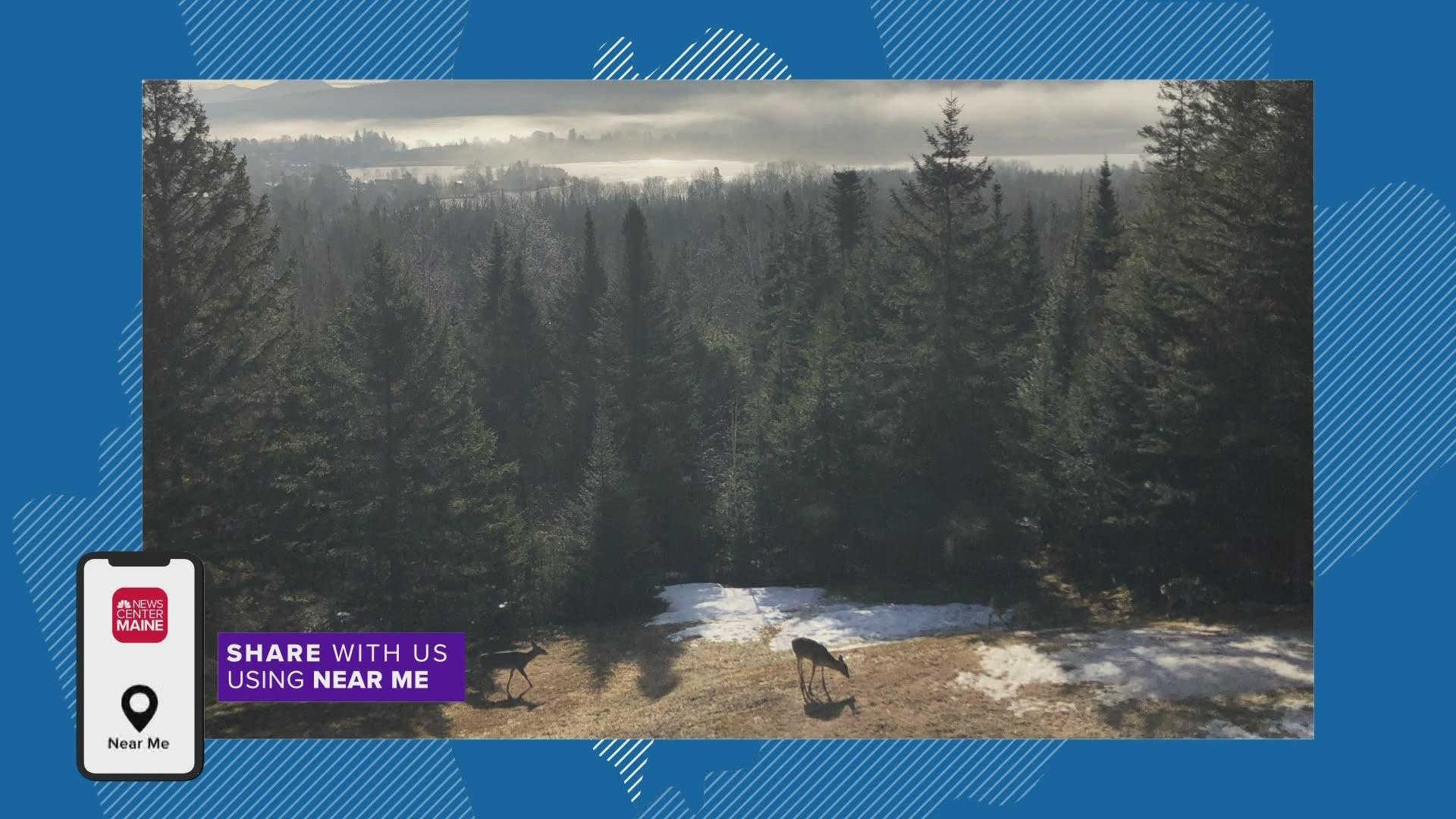 NEAR ME deer in Rangeley | newscentermaine.com