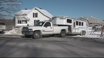 Great Danes seized from home in Hampton ob Tuesday