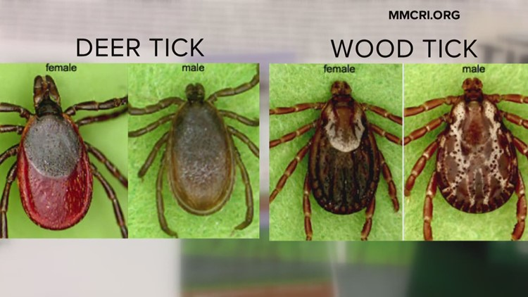 """How's the tick population in Maine this year? """"Pretty robust,"""" says one expert"""