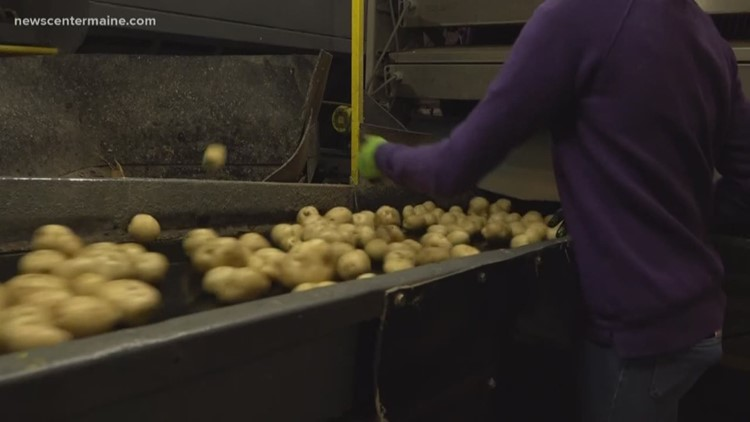 Maine potato growers might need to reduce use of pesticide