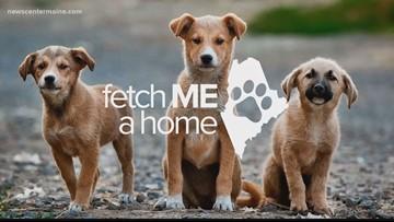 Fetch ME a Home: Mars from Midcoast Humane!