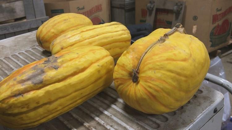 Cape Elizabeth farmers fight food insecurity through Good Shepherd Food Bank