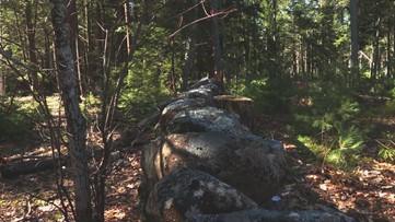 A Breath of Fresh Air: Venturing along a stream in Gray