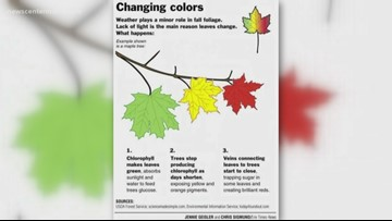 BrainDrops: Why fall foliage tends to start in swamps