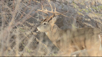 IF&W: 2018 deer hunt likely Maine's best in 15 years