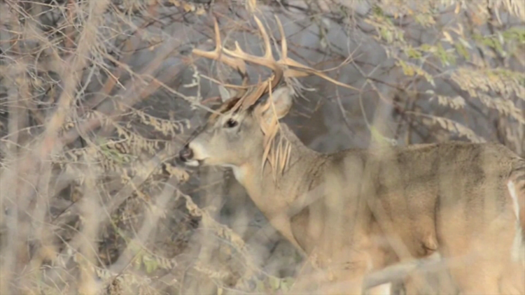 Hunters harvested 27,233 deer last year, according to Maine IF&W — a 15 percent increase.