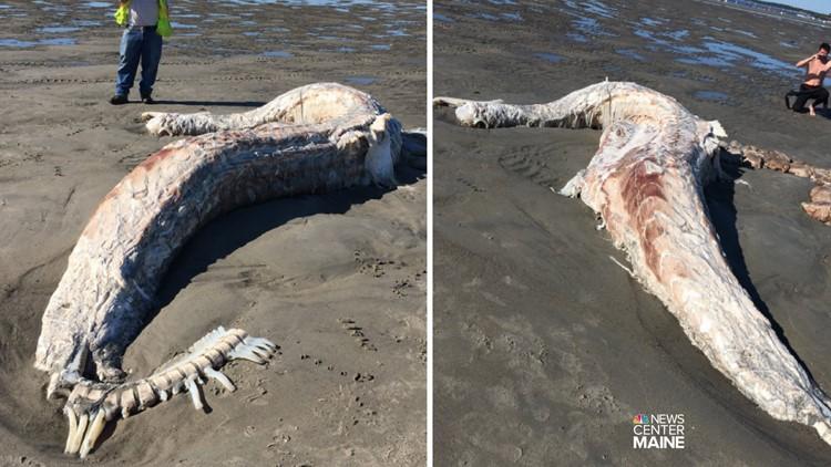 creature on Higgins Beach