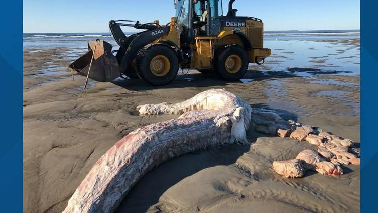 Dead shark carcass_1532017704764.png.jpg