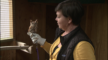 Dealing with wildlife: 'If you care, leave them there'