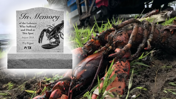 lobster-peta.001_1535577676895.png