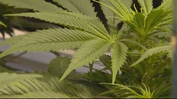 State rolls out marijuana track and trace program training