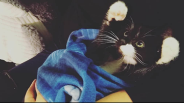 Kitten tossed from car window in Winterport recovering well, suspect sought