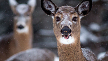 Deadline for Maine's deer hunters to apply for permits