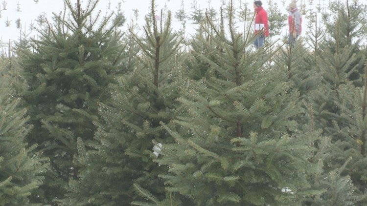 Millennials credited with boosting sales of natural Christmas trees