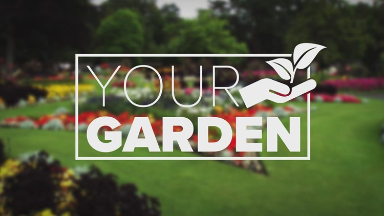 Dry June and rainy July are wreaking havoc on gardens