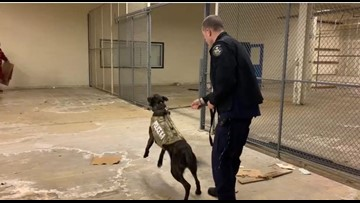 Maine State Police K9's vest means more than protection