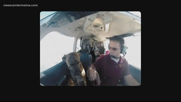 """""""Flying Fur"""" documentary highlights dog rescue in the sky"""