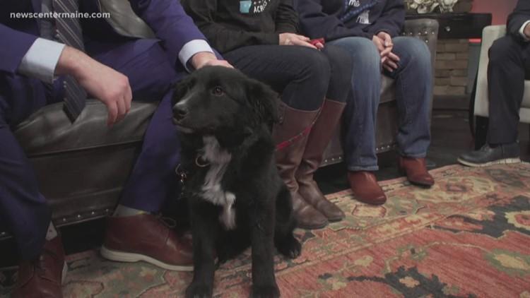 Fetch ME a Home: Nancy the pup