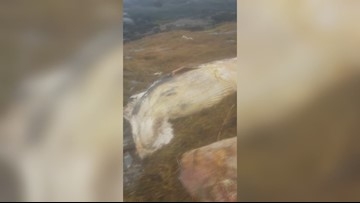 Dead whale washes ashore in Harpswell