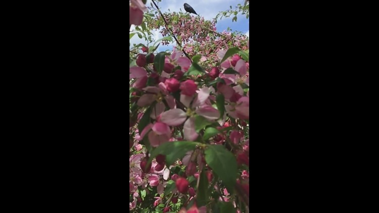 Birdie, Blossoms & Blooms