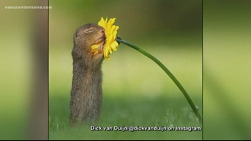 Squirrel stops to smell a flower