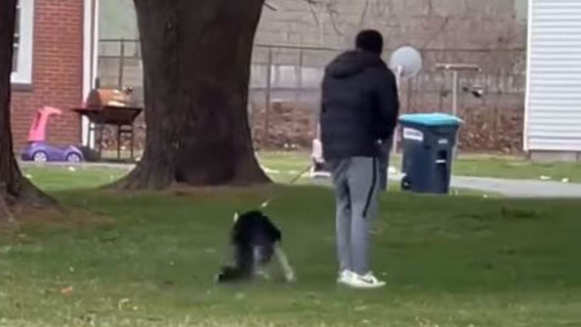 Suspect charged after video of alleged animal cruelty goes viral