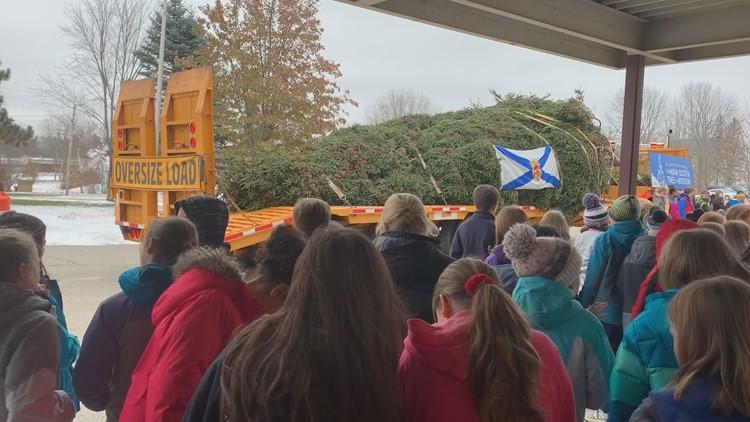 Students observe Halifax Tree