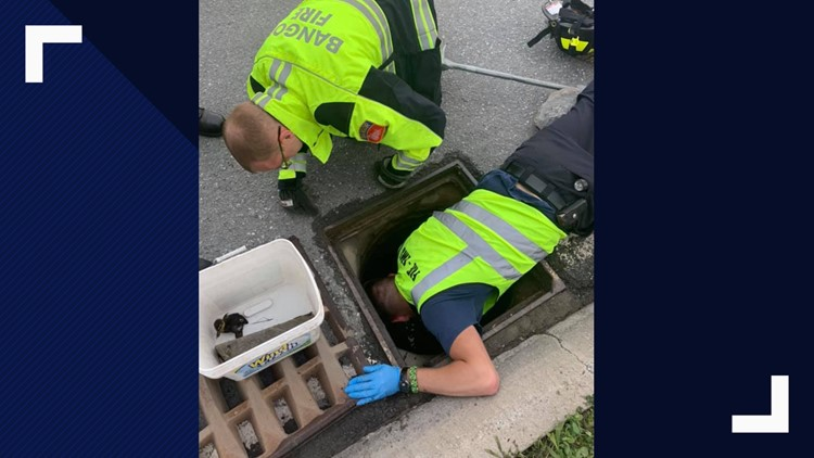 Firefighter heroes rescue ducklings in Bangor