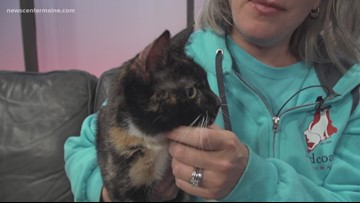 Fetch ME a Home: Cassie the cat up for adoption
