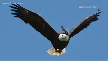 Eagle finds a 'wingman' in Maine