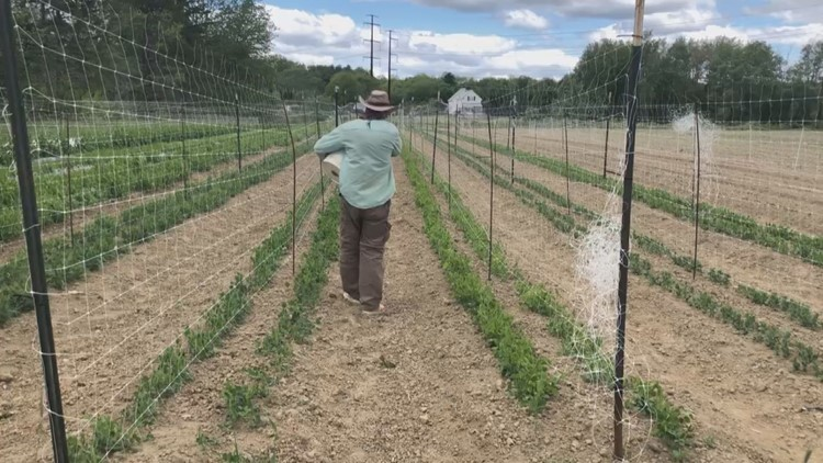 'Farm to Pantry' program aims to help Maine farmers and feed the hungry