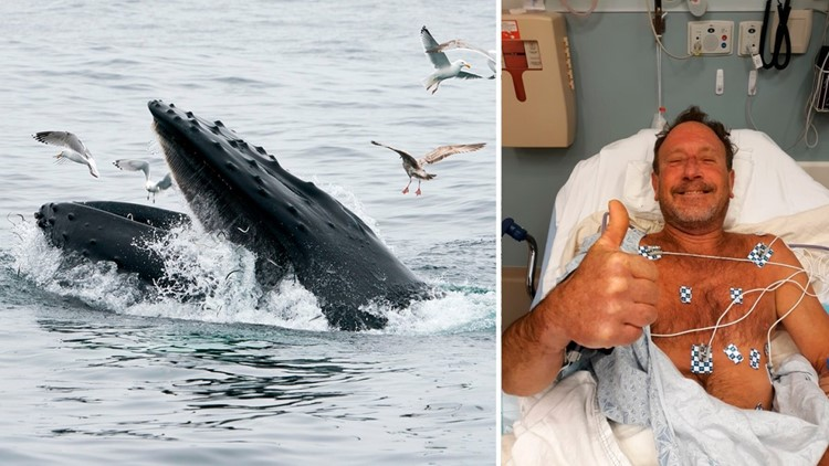 'Oh my God, I'm in the mouth of a whale': What it's like being swallowed by a humpback