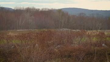 A Breath of Fresh Air: Blueberry fields of Appleton Ridge
