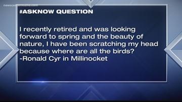 #askNOW: Where'd all the birds go?