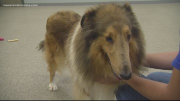 Hoarded animals up for adoption