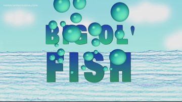 Big Ol' Fish 112518