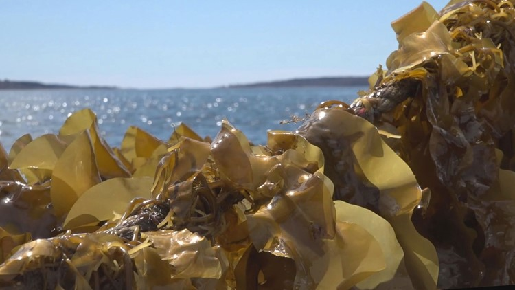 These Portland researchers will pay you to try seaweed bread