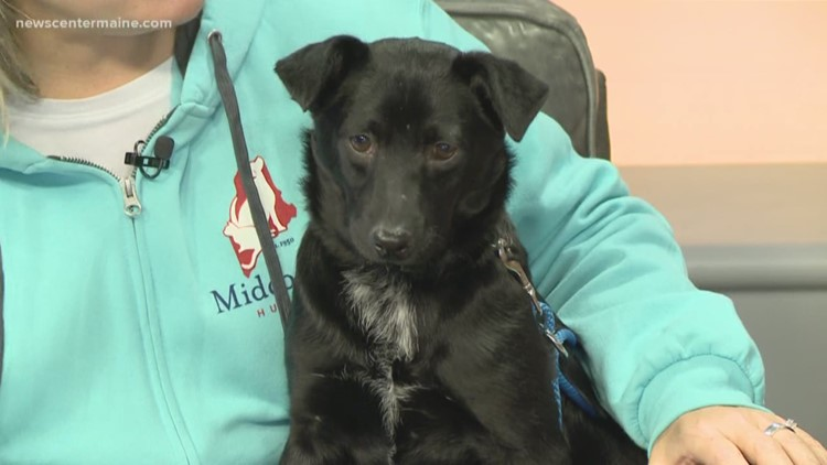 Fetch ME a Home: Bart the lab mix