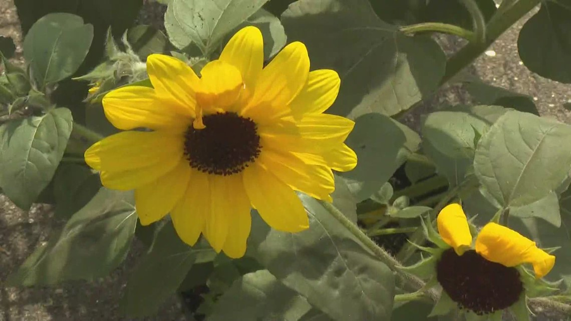 Bursts of color in your garden attract the birds and bees